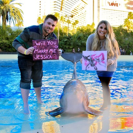 PAINT WITH THE DOLPHINS AT THE MIRAGE 01/01/2014 - 16